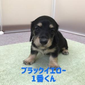 ◆9月6日生まれの子犬ちゃん(*^^*)