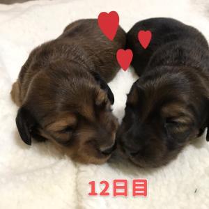 ◆成長記録12日目・13日目(o^^o)