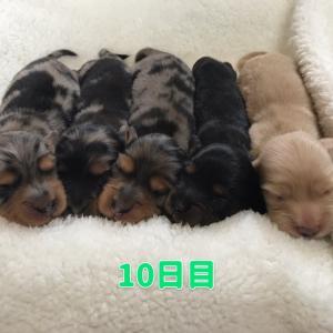 ◆オーロラちゃんbaby成長記録10~16日目ヽ(^o^)丿