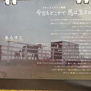 【映画】今日もどこかで馬は生まれる