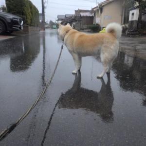 「雨」のち「曇天」