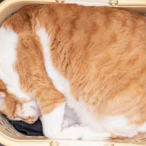トランスフォームする洗濯かご