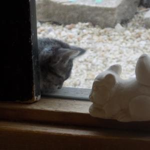 蒼園の看板の横でチャボのように拗ねる猫・・・