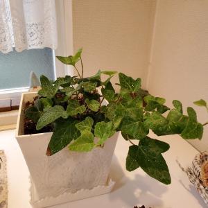 玄関に観葉植物で運気アップ♪&CT検査の結果はいかに?