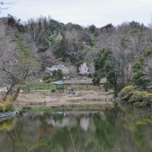 公園の梅とラン展