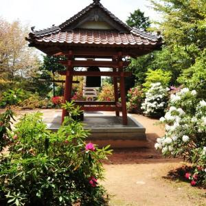 過去の写真~春の花風景 シャクナゲ