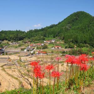 過去の写真ブログ~秋の花風景 その20