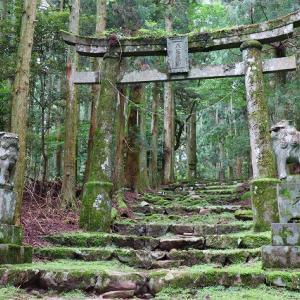 福岡県豊前市 森林浴しませんか・・・カラダの中からスッキリ!