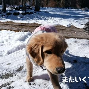 雪はじめて