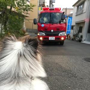 ★☆ 119/今日、私、救急車で運ばれてん…。