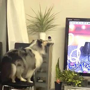 ★☆Peeping Tom/飼い主に会いたいという可愛い犬。