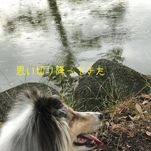 ★☆ 雨に濡れて/ついてない日のついてない境遇。
