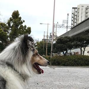 ★☆ 灰色の雲が近づいている/灰色の犬が夜道で近づくと…