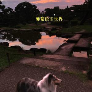 ★☆ トワイライト ~夕暮れ便り~/葡萄色の空色の下…