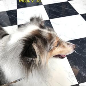 ★☆ 幸福なペット/動物病院の待合室にて…