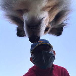★☆ 迷いの森/逃げ出した警察犬。