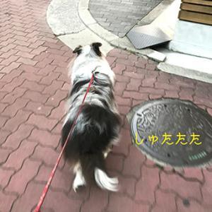 ★☆ GIKKURI/傷心で出かけた散歩で仕入れた情報は…