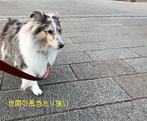 ★☆ 冷たい風/世間の風当たりは強い?