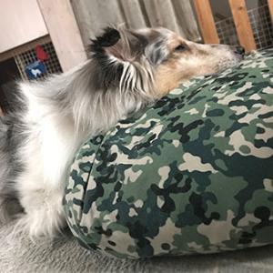 ★☆ 寝るだけさ/可愛いのが、寝落ち寸前の犬。