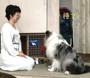 ★☆ Routine/ご飯の前にみなさんは何する??