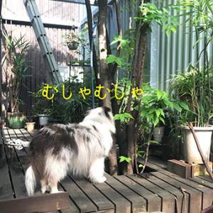 ★☆ ワクチン -淫靡tension mix-/脳内もやもや