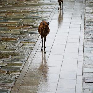 シトシトしと… 6月13日(土)雨