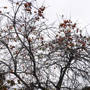ご紹介案件 11月12日(木)晴れ