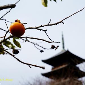 不安定な天気 11月13日(金)曇り一時小雨
