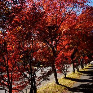夏日? 11月19日(木)晴れのち曇り