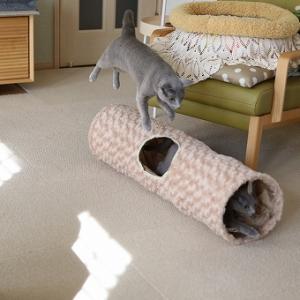 猫。かもしかルミ蔵