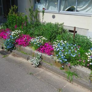 ブルーのお花がいっぱい(*^_^*)