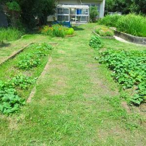 菜園周りの草刈りしたよ