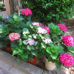 花壇の植え付け始めたよ(^O^)/