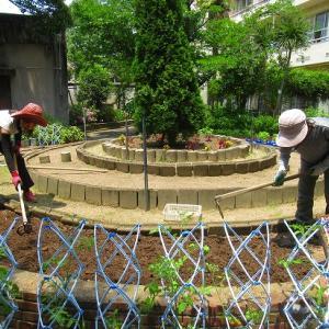 ポーチュラカを植えて~円形花壇の植え付け準備