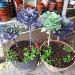 学校の寄せ植え&自宅庭