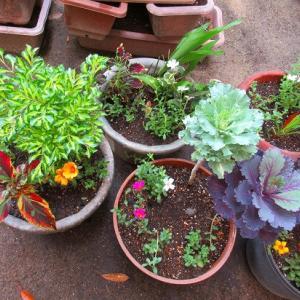 ボーダー花壇にジニアプロヒュージョン植えたよ