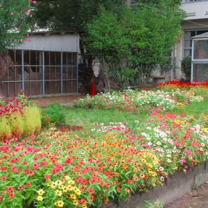 雨後の学校花壇は~