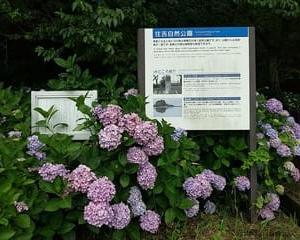 住吉自然公園 (熊本県宇土市)