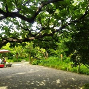 緑豊か。たむけやま。・・・久々の「向島百花園」その1。
