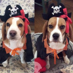 Happy Halloweenて何‼️