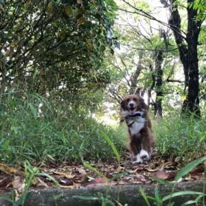 林道走って、庭で遊んで