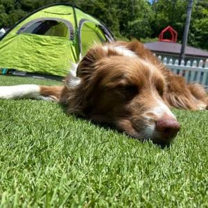 庭でキャンプごっこ♪