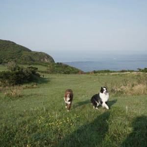 わんこと九州旅行14~生月島を楽しむ~