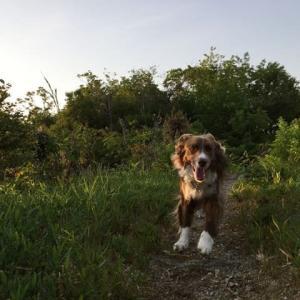 スパイクと朝の散歩へ