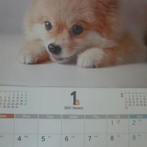 わんにゃんカレンダー