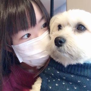 *2/15 TOP30「なりたい生き物」*