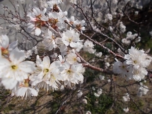 じょじょに春~♪
