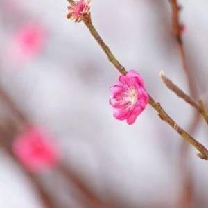 今日は春一番と名づけの日・・・