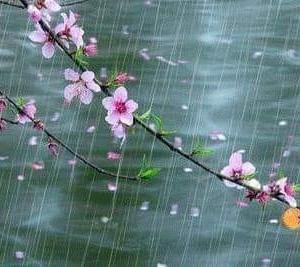 今日は雨水・・・・