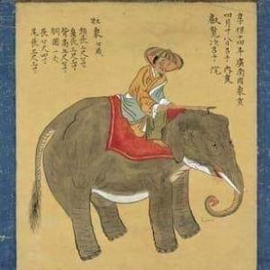 今日は象の日だそうです?